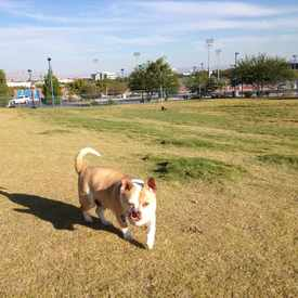 Photo of Dog Park in Pioneer Park