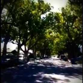 Photo of Tree  Lined Street in Burbank, Ca