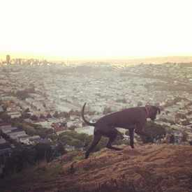 Photo of Bernal Heights Park in Bernal Heights