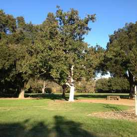 Photo of Selma Olinder Park in Downtown