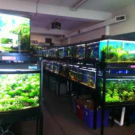 Photo of Wet Spot Tropical Fish in Hollywood