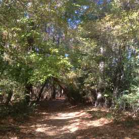 Photo of Wolf River Trails in River Oaks-Kirby-Balmoral
