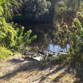 Photo of Hillsborough River in Lowry Park Central