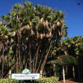 Photo of Gizella Kopsick Palm Arboretum in Historic Old Northeast