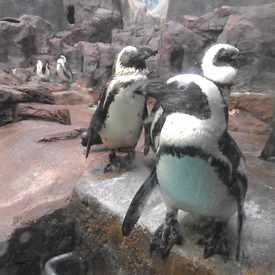 Photo of Penguins At Como Zoo in Como