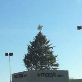 Photo of Macy's Christmas Tree in Lenox