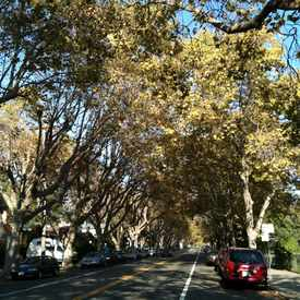 Photo of Hopkins Street, Berkeley, CA