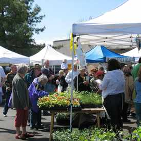 Photo of West Seattle Farmers Market in Gatewood