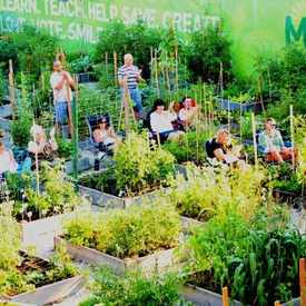 Photo of Montrose Green Community Garden  in Ravenswood