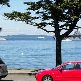 Photo of Magpie On Alki, Seattle WA in Alki