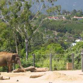 Photo of Santa Barbara Zoo in East Beach