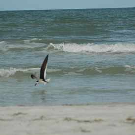 Photo of Gulf of Mexico