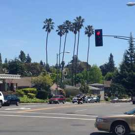Photo of The Tall Palm Trees in Piedmont Avenue