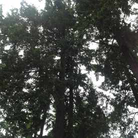 Photo of Tree Canopy in Carter Park