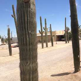 Photo of Saguaro Farm in Amphi