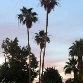 Photo of Palm Trees  in West Enders