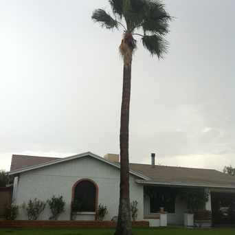 Photo of Palm Tree in Dobson Woods, Mesa