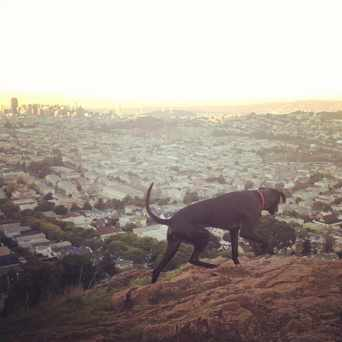 Photo of Bernal Heights Park in Bernal Heights, San Francisco