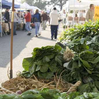 Photo of Thursday Civic Center Farmers Market in San Rafael