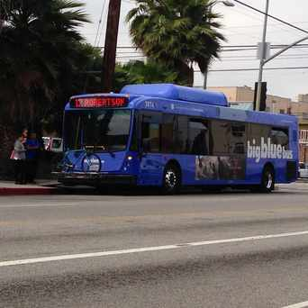 Photo of Big Blue Bus - Palms in Palms, Los Angeles