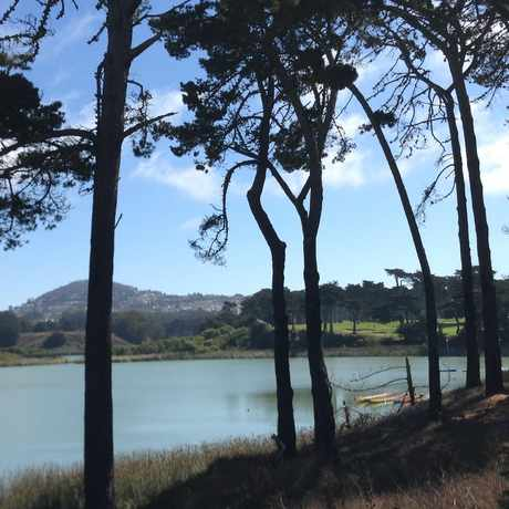 Photo of Harding Park in Lakeshore, San Francisco