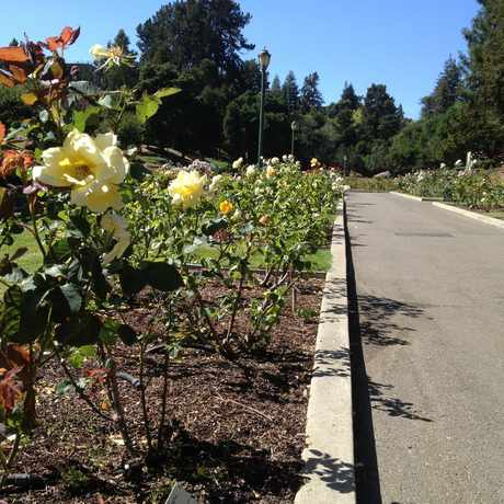 Photo of Morcom Amphitheatre of Roses in Grand Lake, Oakland
